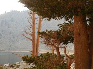 Trees at Chick Spring lake