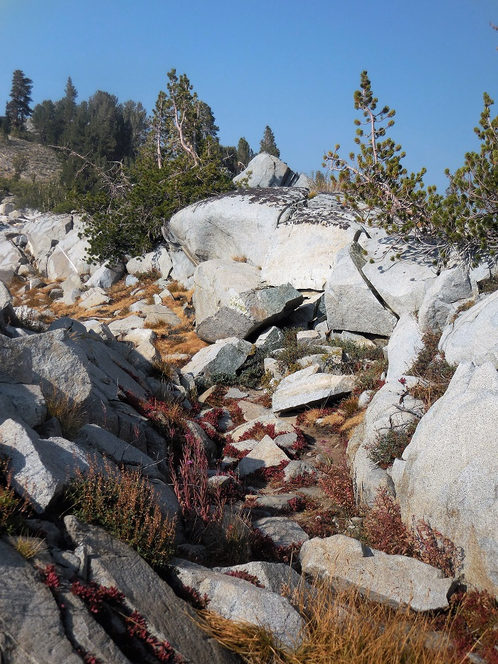 Carolyn Higgins Alone on the JMT trail to Donahue Pass